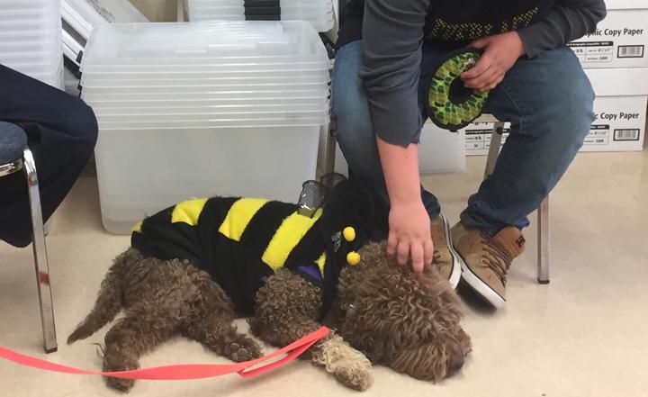 xVando Bee